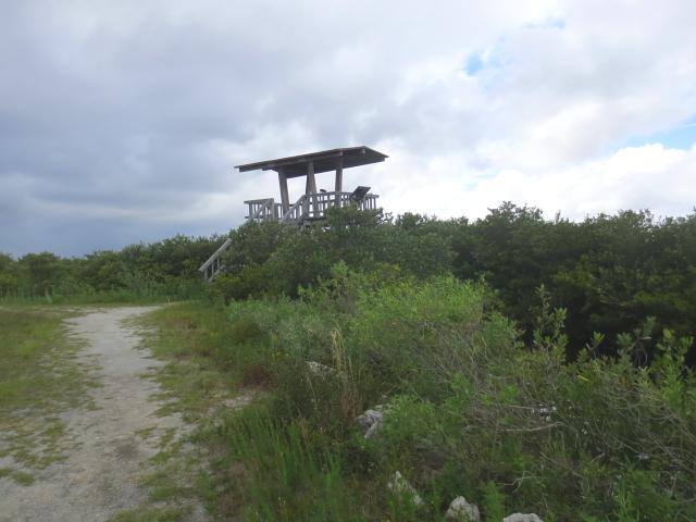 photo4 ブラック・ポイント・ドライブ Black Point Wildlife Drive