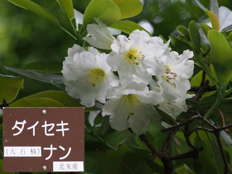 (photo3) 2015/05/14 Photo by 長村氏