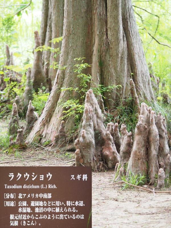 (photo7) 2015/05/14 Photo by 長村氏