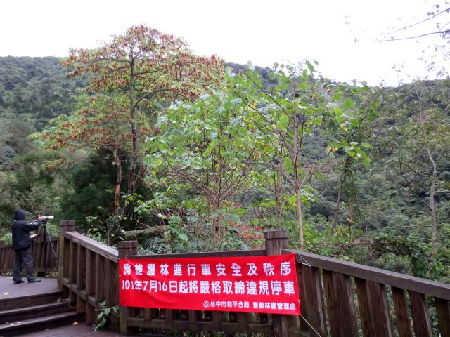 ミミジロチメドリ 成鳥 (6態-5) 賞鳥平台 大雪山国家森林遊楽区 台湾 Bird Watching Deck, Dasyueshan National Forest Recreation Area, Taiwan 2012/11/28 Photo by Kohyuh