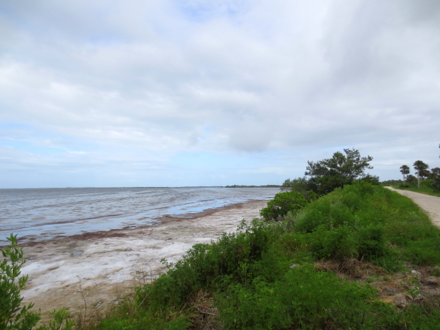 """Bio Lab Road"" (7景-5) メリット島国立野生動物保護区 メリット島 フロリダ 米国"