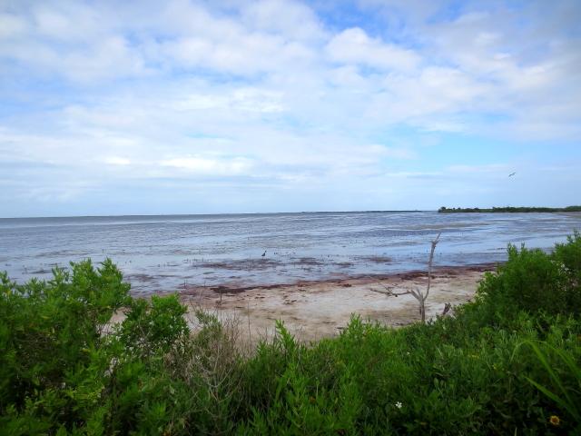 """Bio Lab Road"" (7景-6) メリット島国立野生動物保護区 メリット島 フロリダ 米国"