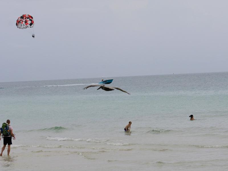 カッショクペリカン (7態-4) マイアミビーチ フロリダ 米国 Miami Beach, Florida, USA 2013/06/02 Photo by Kohyuh