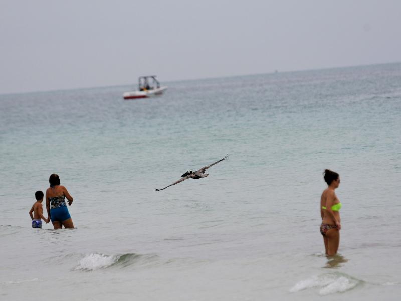 カッショクペリカン (7態-6) マイアミビーチ フロリダ 米国 Miami Beach, Florida, USA 2013/06/02 Photo by Kohyuh